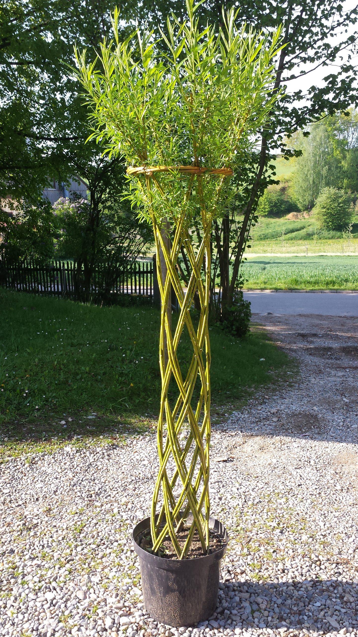 Geflochtener Weidenbaum Weidensepp
