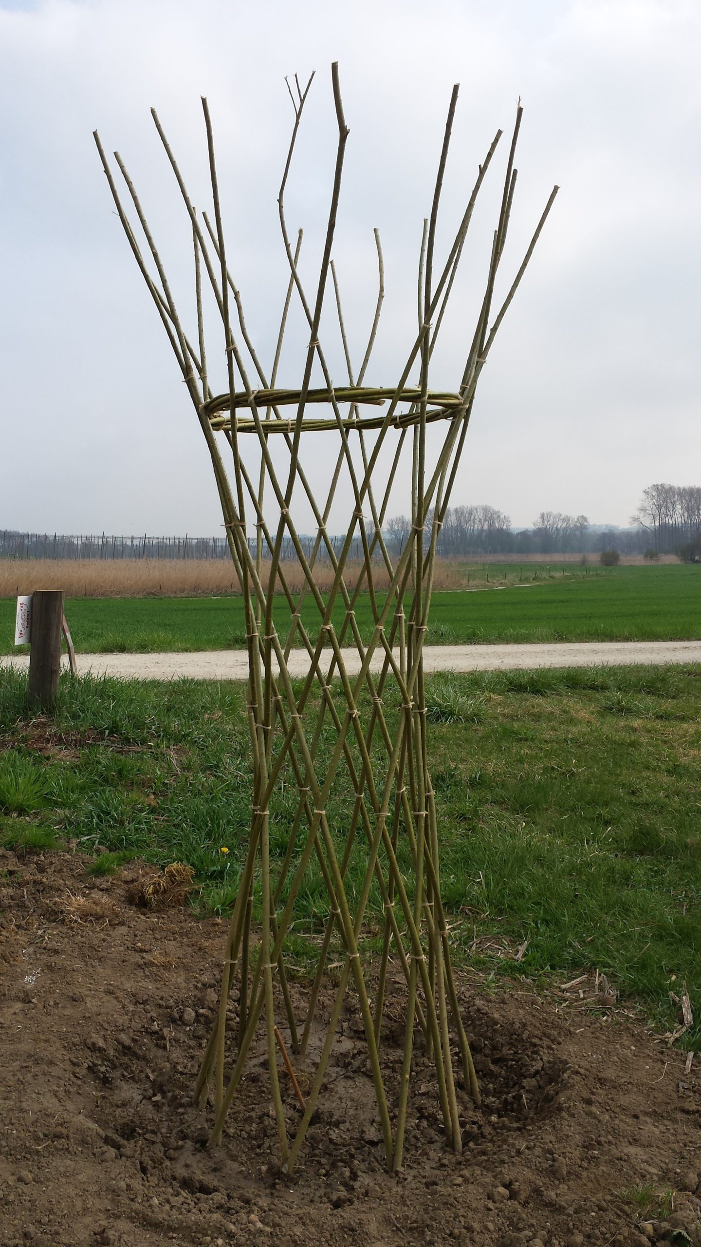 Geflochtener Weidenstamm Weidensepp